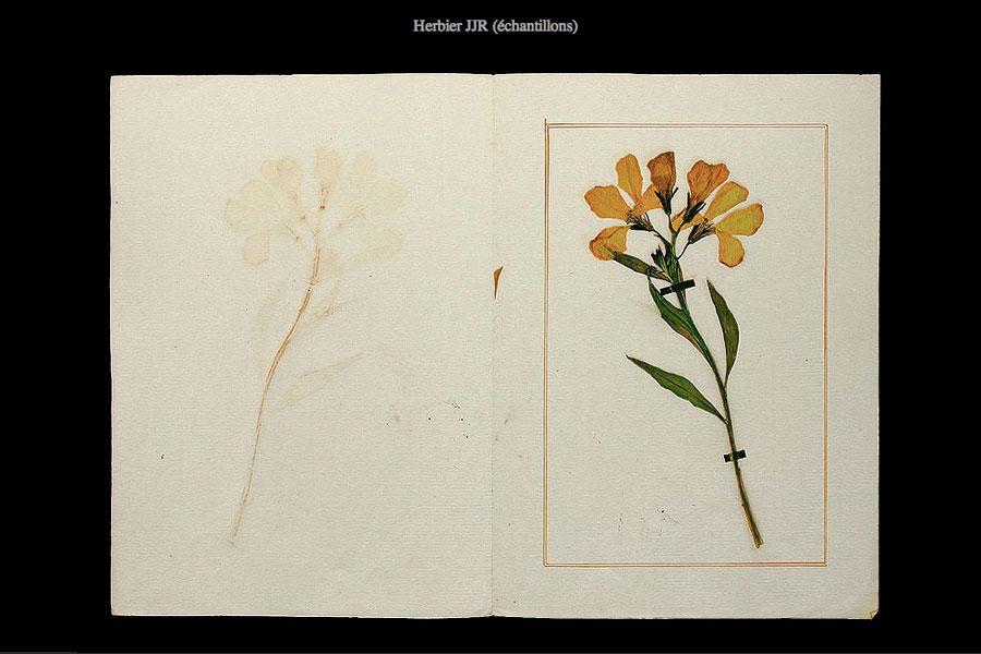 2003-herbier-jjr-06